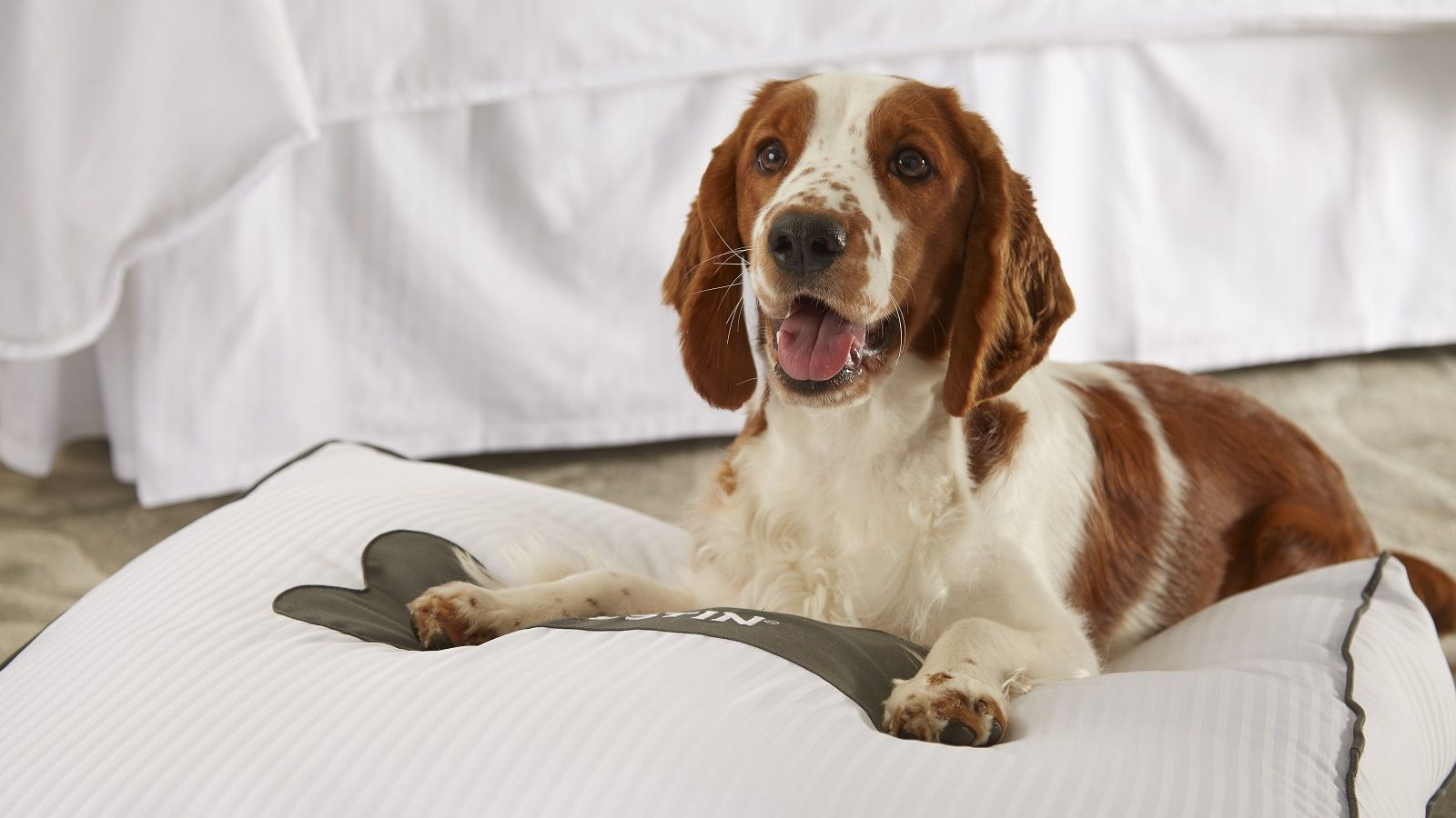 Westin Heavenly Pet Beds